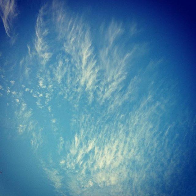 今日の雲、羽みたい。