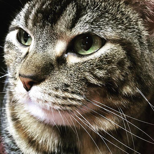 旦那さん実家の#猫 ちゃんに癒されてま...