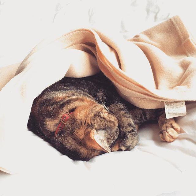 次、お正月まで会えない…寂しい(´・ω・)#猫