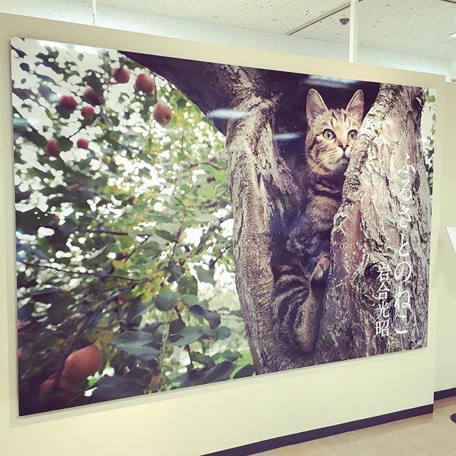 #岩合光昭 さんの写真展に。猫の生き生きとした姿に元気をもらいました(^-^) #ふるさとのねこ #札幌