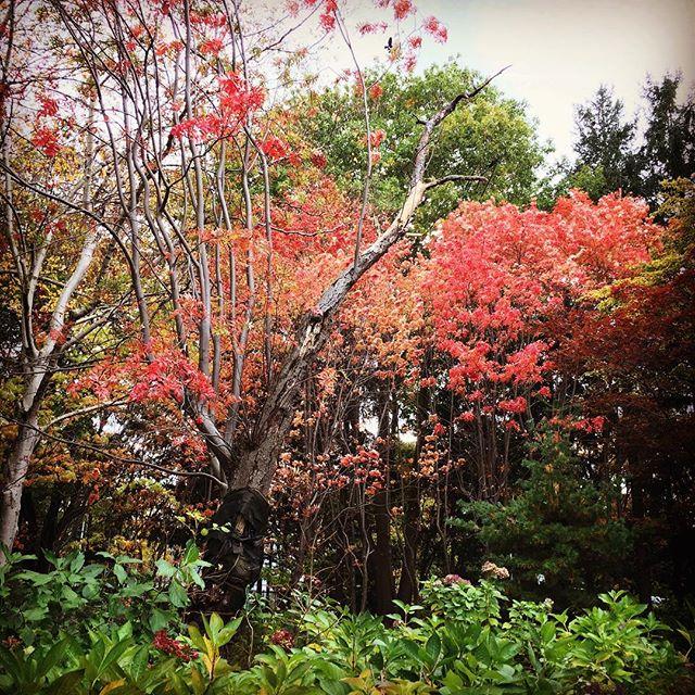 秋と冬が混在。
