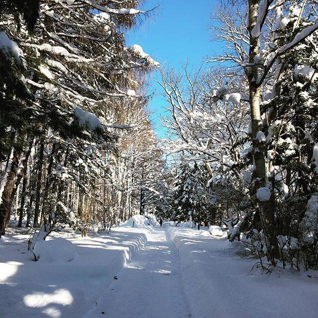 相変わらず雪が降ると、日本じゃない感じになる風景。でも、新雪フカフカで歩いてて楽しかった(笑)#雪かきは大変だけど  #一気に降りすぎ