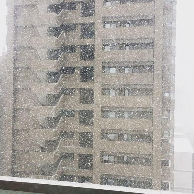 吹雪いてる!4月半...
