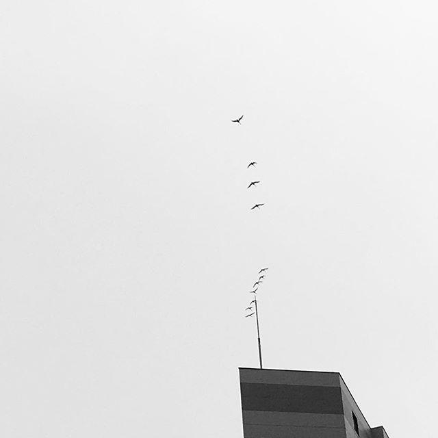 白鳥!! (Instagram)
