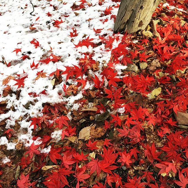 秋と冬。 (Instagram)